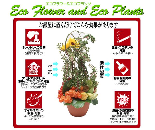 ecoflower_top